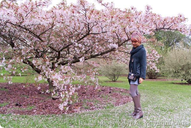 春天赏樱花 (15)