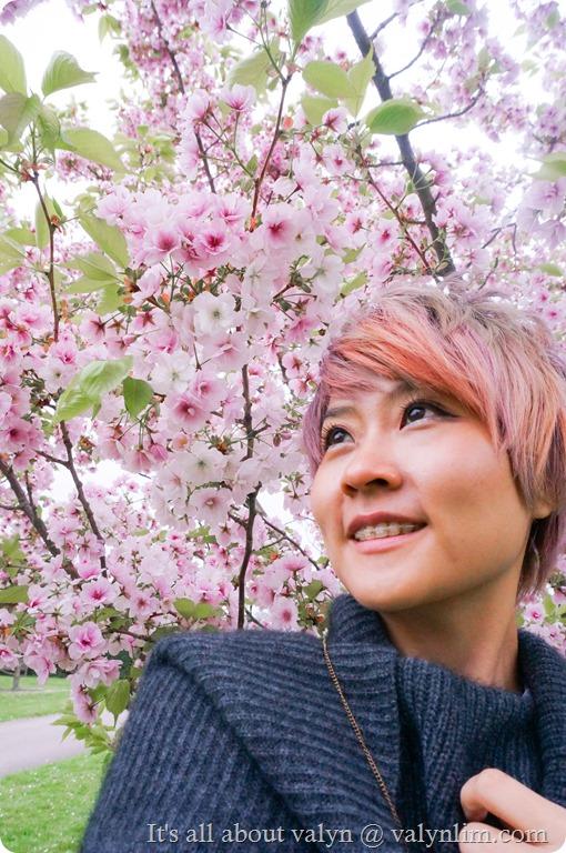 春天赏樱花 (2)