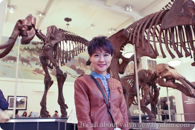 america_museum_of_natural_history_15
