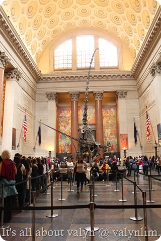america_museum_of_natural_history_2