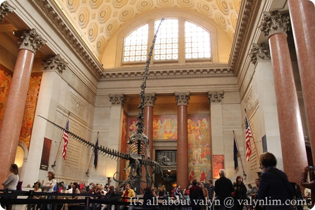america_museum_of_natural_history_3