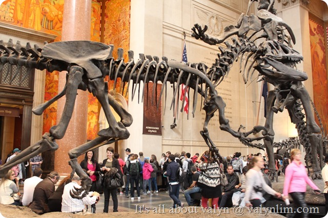 america_museum_of_natural_history_5