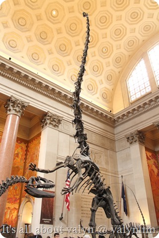 america_museum_of_natural_history_8