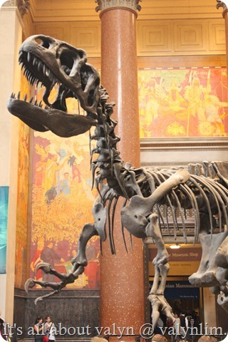 america_museum_of_natural_history_9